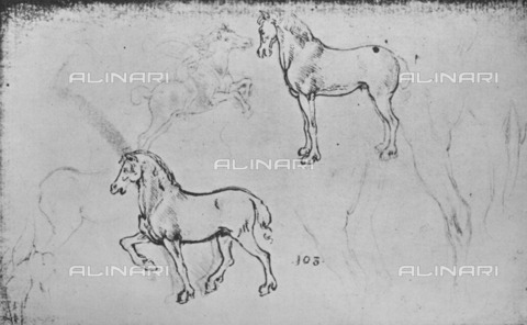 "HIP-S-000264-7695 - Studies of horses (RL 12325r), drawing by Leonardo da Vinci (1452-1519) preserved in the Royal Library of Windsor Castle, from ""The Drawings of Leonardo da Vinci"" (New York, 1945) - The Print Collector / Heritage Images /Alinari Archives, Florence"