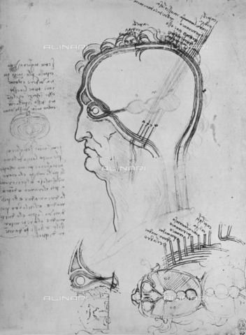 HIP-S-000264-7844 - Section of the head of a man with anatomy of the eye, drawing by Leonardo da Vinci (1452-1519), published by Reynal & Hitchcock, New York - The Print Collector / Heritage Images /Alinari Archives, Florence