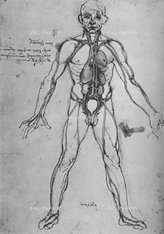 HIP-S-000264-7849 - Man Drawn as an Anatomical Figure to Show the Heart, Lungs and Main Arteries, drawing by Leonardo da Vinci (1452-1519) - The Print Collector / Heritage Images /Alinari Archives, Florence