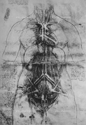 "HIP-S-000264-7864 - The cardiovascular system and principal organs of a woman (RL 12281r), drawing by Leonardo da Vinci (1452-1519) preserved in the Royal Library of Windsor Castle, from ""The Drawings of Leonardo da Vinci"" (New York, 1945) - The Print Collector / Heritage Images /Alinari Archives, Florence"