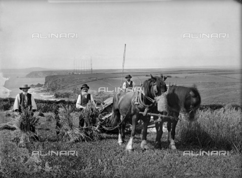 HIP-S-000266-7828 - Richard Harvey and workers harvesting at Trenance, Mullion, Cornwall, 1900-1901. Silver gelatin glass plate negative. This image has captured distinct and somewhat incongruous elements. Traditional intergenerational farming forms the main subject but the distant Marconi Signal Station is a symbol of modernity. The Poldhu Hotel, built to house Marconi workers, can be seen behind the signal station - Data dello scatto: 1900-1901 - Historic England Archive / Heritage Images /Alinari Archives, Florence