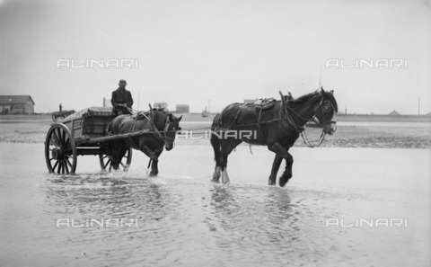 HIP-S-000266-7902 - Shoreham harbour, Shoreham-by-Sea, West Sussex, 1905-1925. A horse-drawn ballast cart in the sea - Data dello scatto: 1905-1925 - Historic England Archive / Heritage Images /Alinari Archives, Florence