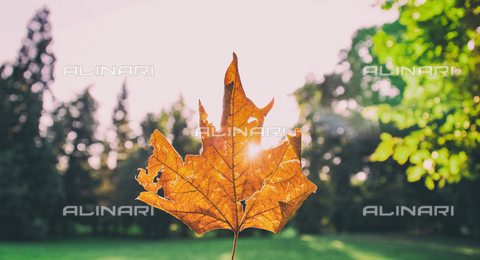 LCA-F-005047-0000 - Autumn leave - Quint Lox / Liszt Collection/Alinari Archives