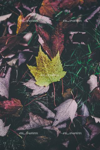 LCA-F-005059-0000 - Foglie in autunno - Liszt Collection/Archivi Alinari, Quint Lox