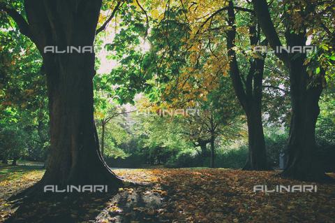 LCA-F-005062-0000 - Parco in autunno - Liszt Collection/Archivi Alinari, Quint Lox