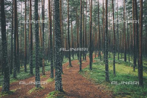 LCA-F-005090-0000 - Sentiero tra gli alberi - Quint Lox / Liszt Collection/Archivi Alinari