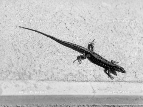 LFA-F-000135-0000 - Lizard under the sun