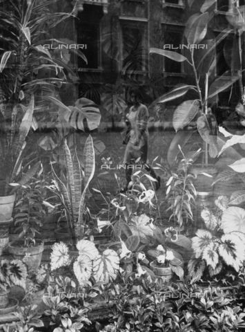 LFA-F-000147-0000 - Exotic plants on display in a shop window. A woman passing by on the street is reflected in the glass