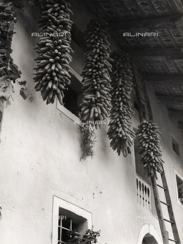 "LFA-F-000190-0000 - ""In Solvenia"". Corn cobs hung in front of a house with a ladder leaning against it"