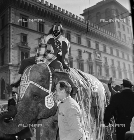 LLA-S-00X351-0002 - Elephant of the Togni circus paradises in Piazza Venezia in Rome - Data dello scatto: 06/01/1957 - Luigi Leoni Archive / Alinari Archives