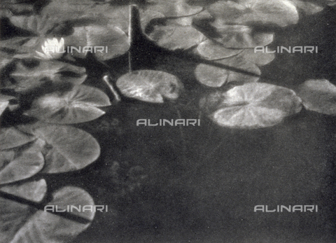 LOB-S-000927-0009 - Detail of a pond by Carlo Baravalle. The dark water is covered in part by leaves and a white water lily, touched by a vibrant luminosity giving a highly pictorial effect - Data dello scatto: 1926-1927 - Archivi Alinari, Firenze