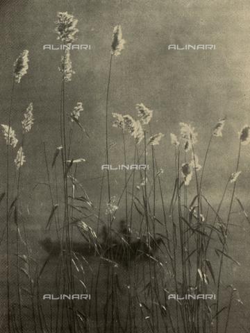 LOB-S-000928-0024 - Fiori spontanei cresciuti sulle sponde di uno stagno. Oltre gli esili steli si intravede un'imbarcazione che solca le tranquille acque lacustri - Data dello scatto: 1927-1928 - Archivi Alinari, Firenze
