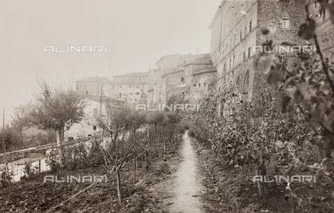 LVQ-L-000156-0003 - Provincial Department of Agriculture of Macerata - Dr. Gregorio Fabbri - The Orchard - School of Camerino in its first six years of life (1923-1928); book published by Tipografia Senesi: view of the orchard - Date of photography: 1923-1928 - Fratelli Alinari Museum Collections, Florence