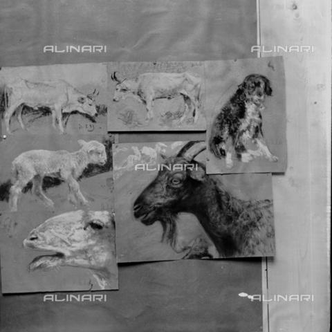 MFA-S-0SN429-000S - Series of representation of animals - Data dello scatto: 1900 ca. - Archivi Alinari, Firenze