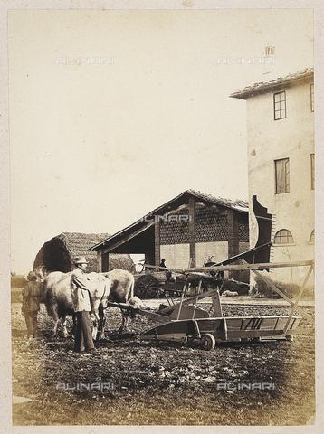 MFC-A-004631-0022 - Grosseto. Estate of Baron Bettino Ricasoli - Date of photography: 1860 ca. - Fratelli Alinari Museum Collections-Malandrini Collection, Florence
