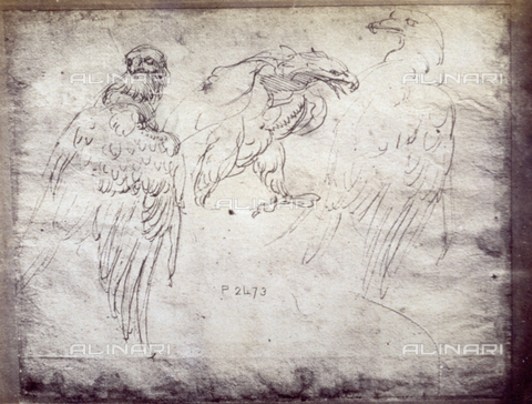 MFC-F-001785-0000 - Sketch of three eagles, by Michelangelo, in the Uffizi - Data dello scatto: 1865 ca. - Archivi Alinari, Firenze