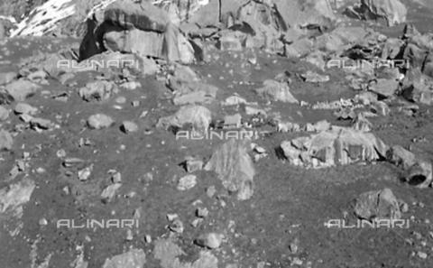 MFV-S-CAI021-0560 - CAI expedition to Gasherbrum IV in the Karakorum massif: Moraines of the Baltoro Glacier - Date of photography: 30/04/1958-03/09/1958 - Fosco Maraini/Gabinetto Vieusseux Property©Fratelli Alinari