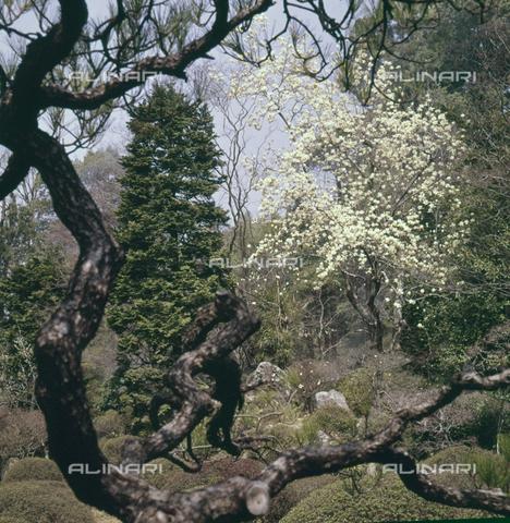 MFV-S-JPN040-0002 - Erin-ji temple garden in Kofu - Date of photography: 1963 - Fosco Maraini/Gabinetto Vieusseux Property©Fratelli Alinari