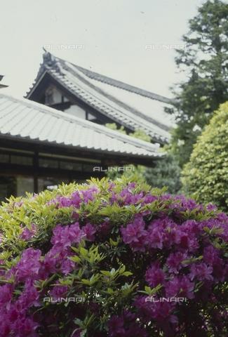 MFV-S-JPN369-0064 - Flowers in the garden of the Chishaku-in temple in Kyoto - Date of photography: 1963-1991 - Fosco Maraini/Gabinetto Vieusseux Property©Fratelli Alinari