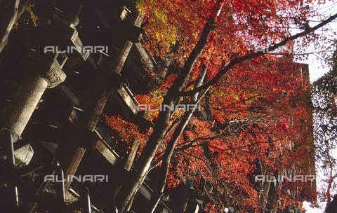 """MFV-S-JPN369-0090 - Tempio di Kiyomizu-dera (""""Il tempio dell'acqua pura""""), particolare, Kyoto - Data dello scatto: 11/1987 - Fosco Maraini/Proprietà Gabinetto Vieusseux©Fratelli Alinari"""
