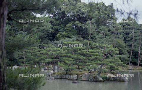 """MFV-S-JPN369-0097 - Tempio di Kinkaku-ji (""""Tempio del padiglione d'oro""""), particolare del giardino, Kyoto - Data dello scatto: 1963-1991 - Fosco Maraini/Proprietà Gabinetto Vieusseux©Fratelli Alinari"""