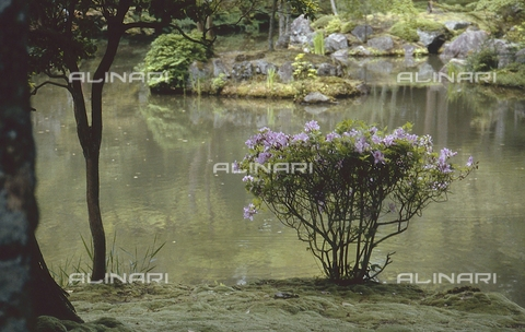"""MFV-S-JPN369-0105 - Particolare del giardino di muschio detto """"Koke-dera"""" all'interno del tempio buddista Saihō-ji, Kyoto - Data dello scatto: 1963-1991 - Fosco Maraini/Proprietà Gabinetto Vieusseux©Fratelli Alinari"""