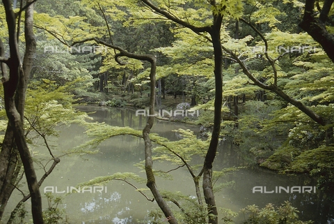 """MFV-S-JPN369-0108 - Particolare del giardino di muschio detto """"Koke-dera"""" all'interno del tempio buddista Saihō-ji, Kyoto - Data dello scatto: 1963-1991 - Fosco Maraini/Proprietà Gabinetto Vieusseux©Fratelli Alinari"""
