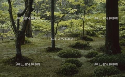 """MFV-S-JPN369-0111 - Particolare del giardino di muschio detto """"Koke-dera"""" all'interno del tempio buddista Saihō-ji, Kyoto - Data dello scatto: 1963-1991 - Fosco Maraini/Proprietà Gabinetto Vieusseux©Fratelli Alinari"""