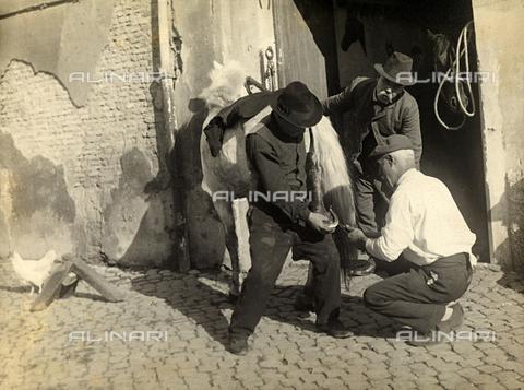 MLD-F-000181-0000 - Tre uomini sono intenti nella ferratura di un cavallo. Alla porta della stalla si intravede il muso di un altro cavallo - Data dello scatto: 1910-1920 ca. - Archivi Alinari, Firenze