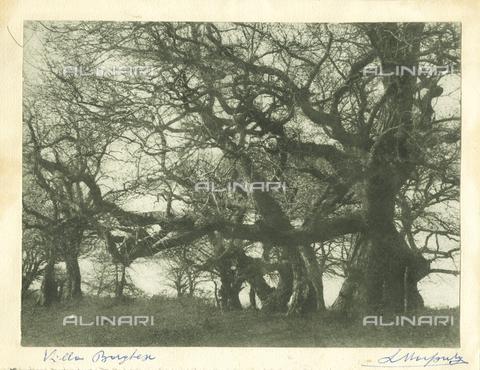 MLD-F-000223-0000 - Scorcio del parco di Villa Borghese a Roma. In primo piano grandi alberi spogli - Data dello scatto: 1910-1920 ca. - Archivi Alinari, Firenze