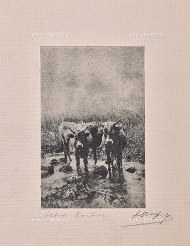 MLD-F-000259-0000 - Nelle paludi pontine - Data dello scatto: 1920-1929 - Archivi Alinari, Firenze