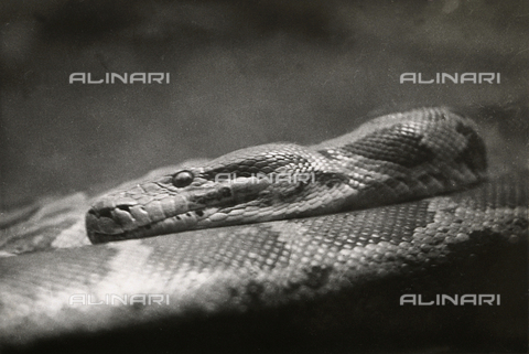 MLD-F-000474-0000 - A python