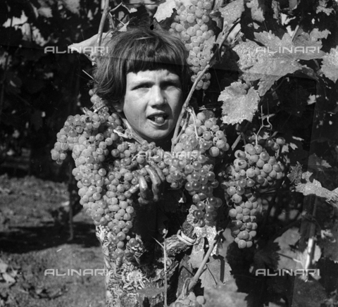 NVQ-S-002199-0026 - Grape harvesting: a child to work