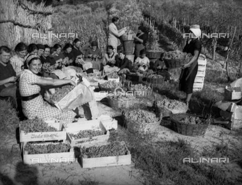 NVQ-S-002199-2004 - Vendemmia nei vigneti di Forrottoli a Quarrata: ritratto di gruppo - Data dello scatto: 1948 - Archivi Alinari, Firenze