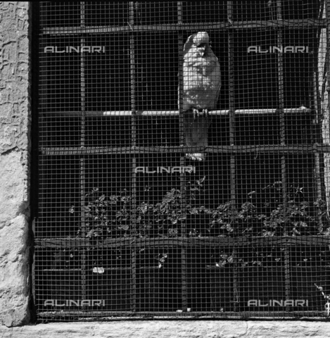 OMD-S-000429-0014 - Parrot at the window - Date of photography: 25/04-01/05/1991 - Fratelli Alinari Museum - donation Orioli, Florence
