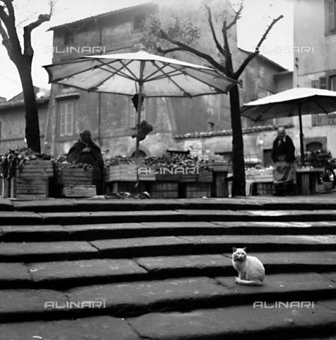 PAQ-F-000911-0000 - Fruit stalls in Ascoli Piceno - Data dello scatto: 1961 - Archivi Alinari, Firenze