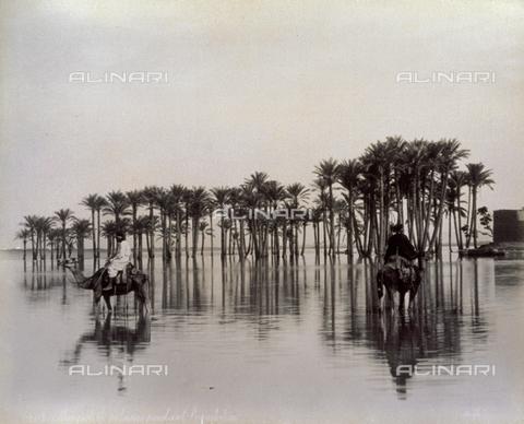 PDC-A-004676-0043 - Uomini con cammello attraversano un'area desertica allagata dall'inondazioni del Nilo, Egitto - Data dello scatto: 1870-1880 - Raccolte Museali Fratelli Alinari (RMFA)-collezione Palazzoli, Firenze