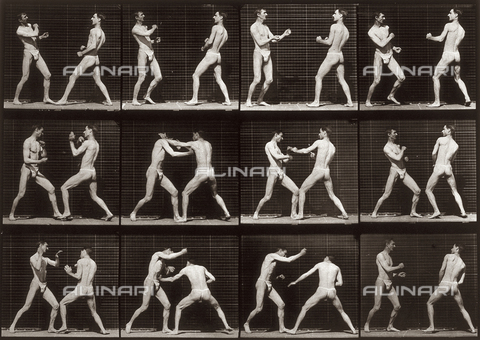 "PDC-A-004694-0338 - ""Animal Locomotion"" (plate 338): sequence with two half naked men fighting"