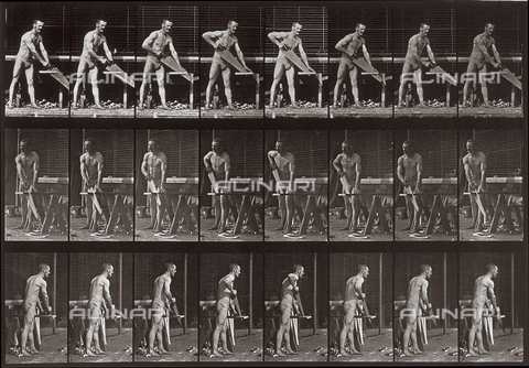 "PDC-A-004695-0380 - ""Animal Locomotion"" (plate 380):sequence with a half-naked man cutting wood with a saw - Data dello scatto: 1887 - Archivi Alinari, Firenze"