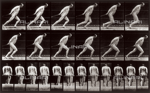 "PDC-A-004695-0392 - ""Animal Locomotion"" (plate 392): sequence with a naked man dragging an invisible object - Data dello scatto: 1887 - Archivi Alinari, Firenze"
