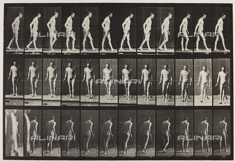 "PDC-A-004695-0559 - ""Animal Locomotion"" (tav. 559): sequenza con un uomo nudo che cammina - Data dello scatto: 1887 - Archivi Alinari, Firenze"
