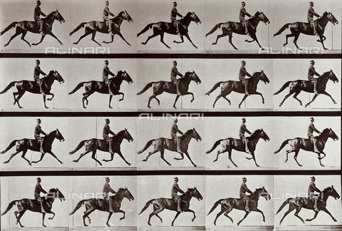 "PDC-A-004695-0591 - ""Animal Locomotion"" (tav. 591): sequenza con fantino a cavallo - Data dello scatto: 1887 - Archivi Alinari, Firenze"