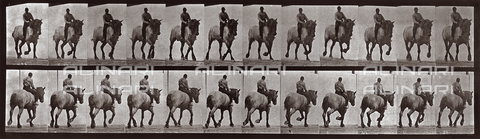 "PDC-A-004695-0599 - ""Animal Locomotion"" (tav. 599): sequenza con fantino a cavallo - Data dello scatto: 1887 - Archivi Alinari, Firenze"