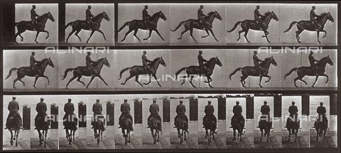 "PDC-A-004695-0601 - ""Animal Locomotion"" (tav. 601): sequenza con fantino su un cavallo al trotto - Data dello scatto: 1887 - Archivi Alinari, Firenze"