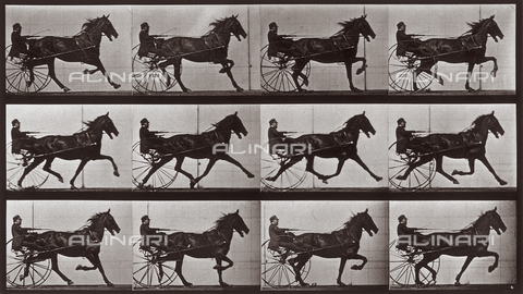 "PDC-A-004695-0606 - ""Animal Locomotion"" (tav. 606): sequenza con fantino sul calesse trainato dal cavallo al trotto - Data dello scatto: 1887 - Archivi Alinari, Firenze"