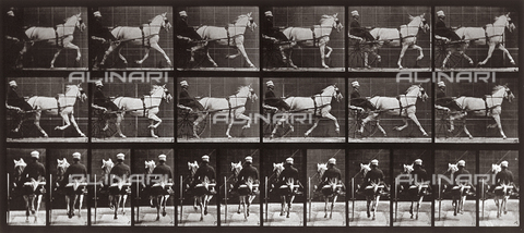 "PDC-A-004695-0611 - ""Animal Locomotion"" (tav. 611): sequenza con fantino sul calesse trainato dal cavallo al trotto - Data dello scatto: 1887 - Archivi Alinari, Firenze"