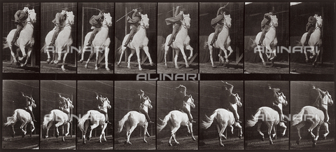 "PDC-A-004695-0634 - ""Animal Locomotion"" (tav. 634): sequenza con fantino sul cavallo al trotto - Data dello scatto: 1887 - Archivi Alinari, Firenze"