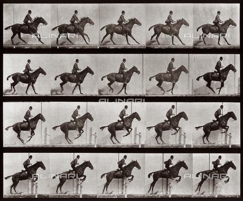 "PDC-A-004695-0636 - ""Animal Locomotion"" (tav. 636): sequenza con fantino sul cavallo che salta un ostacolo - Data dello scatto: 1887 - Archivi Alinari, Firenze"