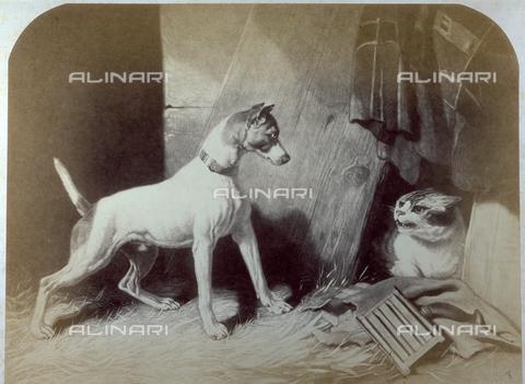 PDC-F-001749-0000 - L'immagine riproduce un'incisione del dipinto di De Drux:'Cane e Gatto' - Data dello scatto: 1855-1875 - Raccolte Museali Fratelli Alinari (RMFA)-collezione Palazzoli, Firenze