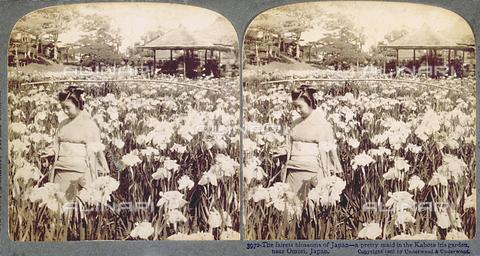 PDC-F-002489-0000 - Giardino di iris vicino a Omori (Giappone). In primo piano, giovane donna in kimono. Sullo sfondo, un chiosco ed alcuni alberi - Data dello scatto: 1905 ca. - Archivi Alinari, Firenze
